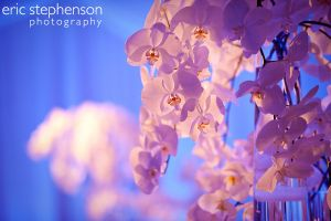 Denver-wedding-reception-gorgeous-flowers.jpg